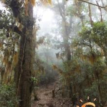 Eichenwälder